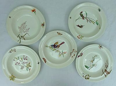 5 x Antique Wedgwood Soup Bowls Botanical Birds Insects Mid 19th C Plates 1800's