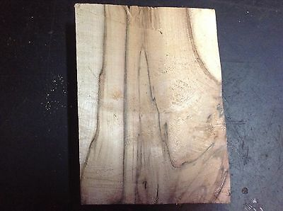 Spalted Sycamore Block For Turning