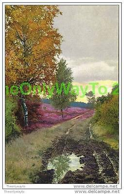 FOREST TRACK , ENGLAND, c1910s, Postcard