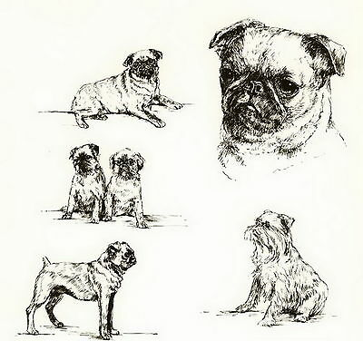 Old Vintage Brussels Griffon Griffon Bruxello Dog Art Print Matted Gift 10x8