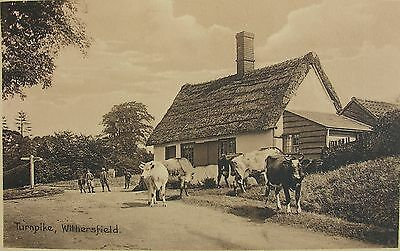 CATTLE AT THE TURNPIKE WITHERSFIELD NEAR HAVERHILL SUFFOLK c1905 PC