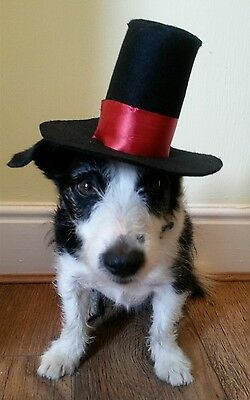 Dogs fancy dress top hat