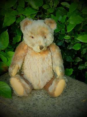 'kaiser' Adorable Large Very Old German Steiff Antique Bear 1950's