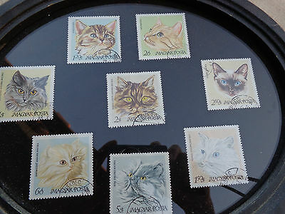 CAT LOVERS & STAMP COLLECTORS, 8 Beautiful CATS, Stamp Collection, framed
