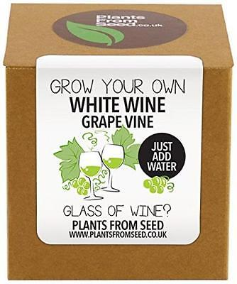Plants From Seed Grow Your Own White Grape Vine