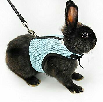 Blue S Hamster Small Cat Rabbit  Pig Rat Ferret Breathable Harness Leash Lead