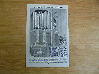 1930/40`s print/picture of how a mighty organ `breathes` and `sings`