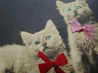 1992 Novelty Cats With Bright Eyes & Bows  Postcard
