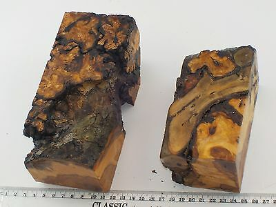 2 English Burr Apple wood woodturning or carving blanks with embedded Ivy.  0895