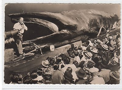 """JONAH"" THE GIANT WHALE caught off Trondjheim: Norway postcard (C28972)"