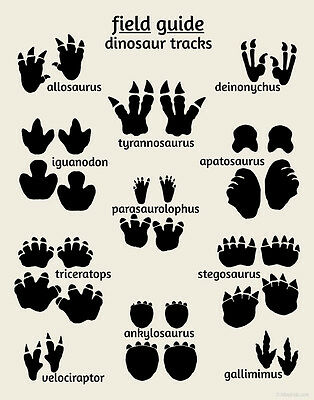 Dinosaur Tracks Poster, Kids Nursery Art Print , Field Guide Series, Footprints
