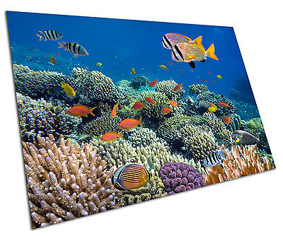 Coral Reef Tropical Fish Wall Art Large A1 Poster 33 X 23 Inch  sc 1 st  PicClick UK & Coral Reef Tropical Fish Wall Art Large A1 Poster 33 X 23 Inch