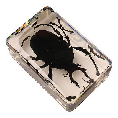 "Instant Insect Collection - Set of 12 Real Insects in Resin Cubes - 1 3/4"" Each"