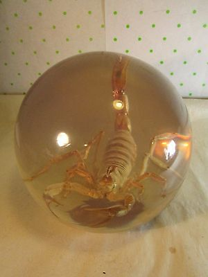 """Vintage Scorpion Encased In Acrylic Ball Paperweight BIG 14"""" around the middle"""