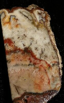 43. Mexican Lace Agate Rough Slab