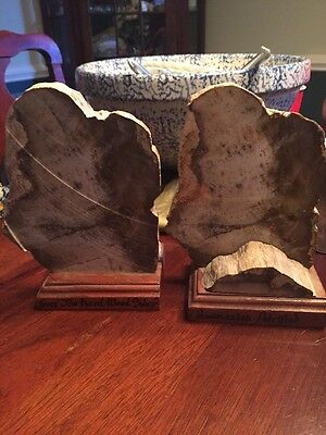 Pair of Polished Petrified Fossilized Wood Book Ends From Fort Kobb Panama