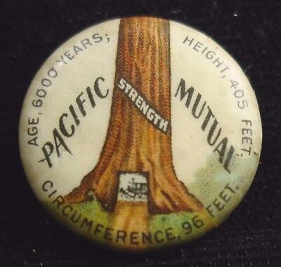c 1900 PINBACK LAPEL PIN -- PACIFIC MUTUAL INSURANCE -- GIANT REDWOOD OR SEQUOIA