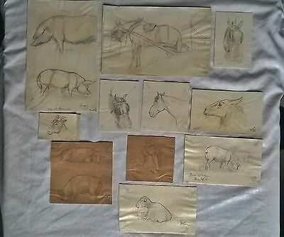 Collection Of Eleven Authentic Original Small Sketches By Lucy Dawson Aka Mac