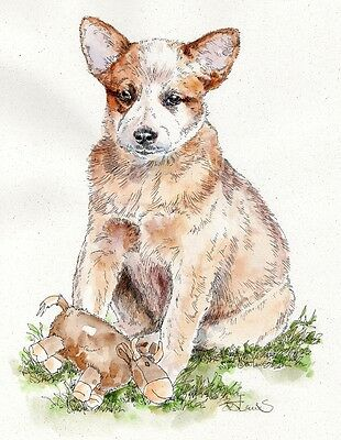 AUSTRALIAN CATTLE DOG Original Watercolor on Ink Print Matted 11x14 Ready 2Frame