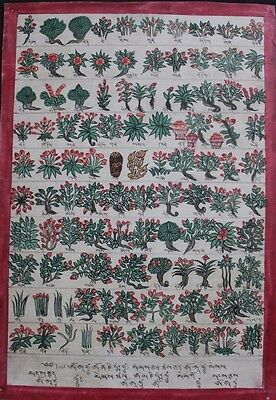 Old Rare Late 20C Buddhist Medical Herbs Thangka Painting Tibet