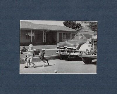 Great Dane Helps Little Girl to Safety 1958 Print Matted