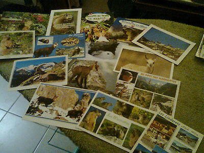 lot de cartes postales : animaux des montagnes, 15 cartes