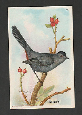 1918 Arm & Hammer~Dwight's~Soda Advertising on A Card~CATBIRD~Combined S. & H.