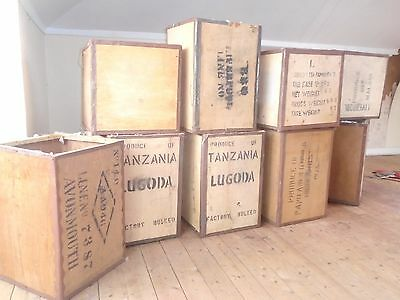 Nine Vintage Wooden Tea Chest