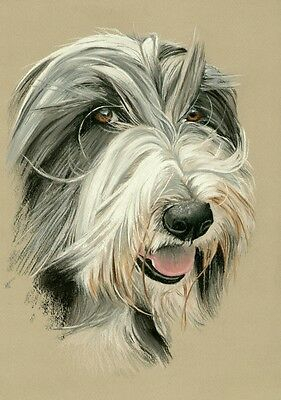 BEARDED  COLLIE   *   A4  Limited  Print   # 26