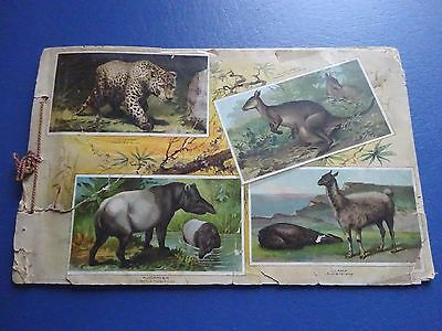 Rare 1890 Arbuckle Brothers Coffee Animal Illustrated Album of Natural History