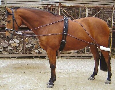 Harry's Horse Lunging System