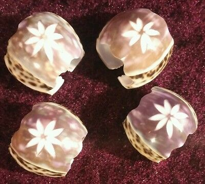 Set of 4 Carved Tiger Cowrie Shell Napkin Rings Carved star flower