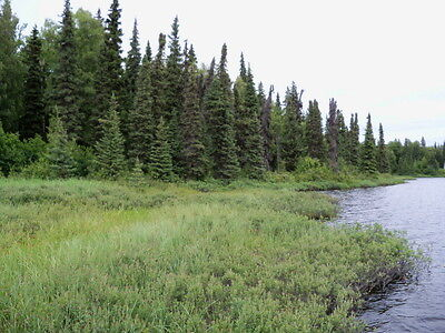 Rare and Prime Alaska Lake Front Property of 4.997 acres - Southcentral Alaska