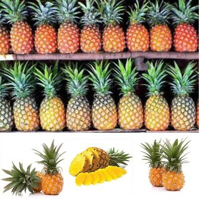20PCS/BAG Pineapple Seeds Juicy Delicious Fruit Seed Hot Sale