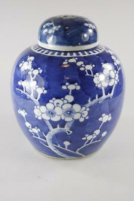 Antique Chinese Blue & White Large Ginger Jar Plum Blossoms