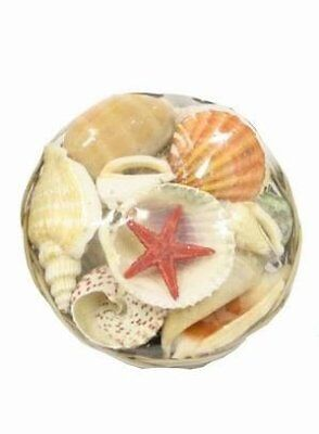Natural Sea Shell Baskets with Starfish (ideal for Home Decorations, Art &