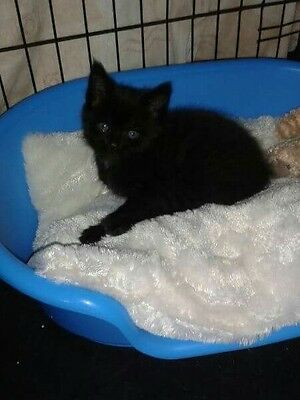 Pls help Tiny Tim at WHINNYBANK CAT SANCTUARY - 5 catnip knitted toy mice.