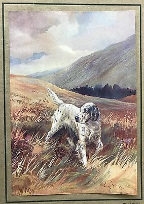 1931 ENGLISH SETTER DOG Original Book Print from the Painting by WARD BINKS