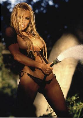 Pamela Anderson 11.5 x 8.5 inch Glossy Photo No6