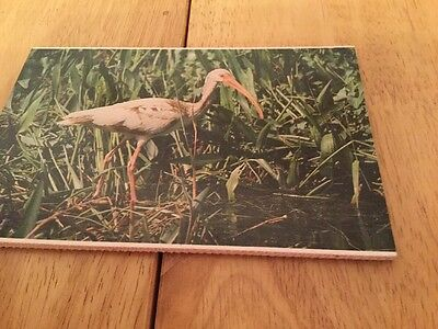 Everglades Animals Postcard