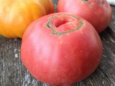 50 ORGANIC Heirloom Mortgage Lifter Tomato Seeds. Non-GMO. Old Fashioned Flavor!