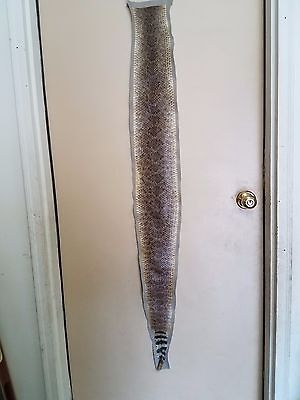 "Western Diamondback rattlesnake skin rug taxidermy prairie 56"" long"