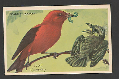 Equitable Life~ Jack Murray~Advertising Bird Cards~ Scarlet Tanager~Comb. S.& H