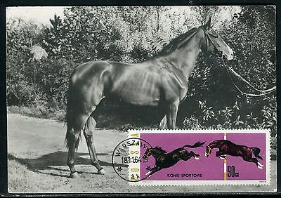 Pologne - Carte Maximum 1964 - Cheval