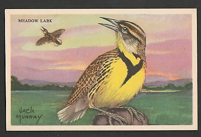 Equitable Life~ Jack Murray~Advertising Bird Cards~ Meadowlark~ Comb.S.& H..