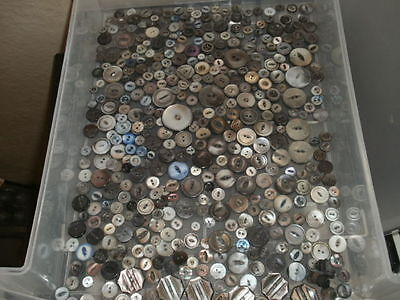 Genuine Abalone Shell Two Hole Antique Buttons Large Lot