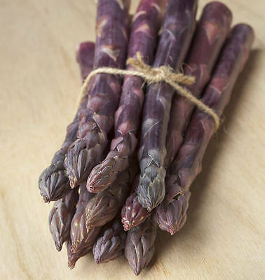 Asparagus Sweet Purple (30Seeds) - Organic Heirloom from Life-Force Seeds