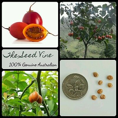 10+ TAMARILLO SEEDS (Solanum betaceum) Tomato Tree Edible Fast Growing Plant