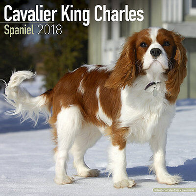 Calendrier 2018 - CAVALIER KING CHARLES