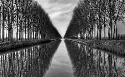 WALL MURAL PHOTO WALLPAPER XXL Water Canal Tree Alley Avenue Reflection (1X-5647